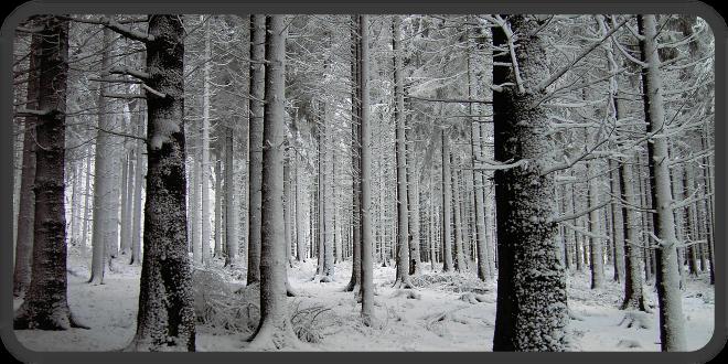 winterwunderarsch
